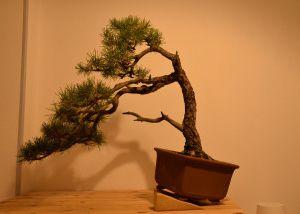 La photo 3 est l'arbre AVANT transformation,la dernière APRES