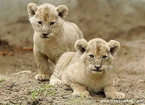 Beauté animale...