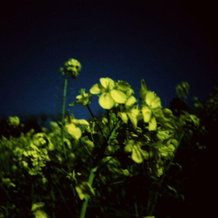 Album - Lomo