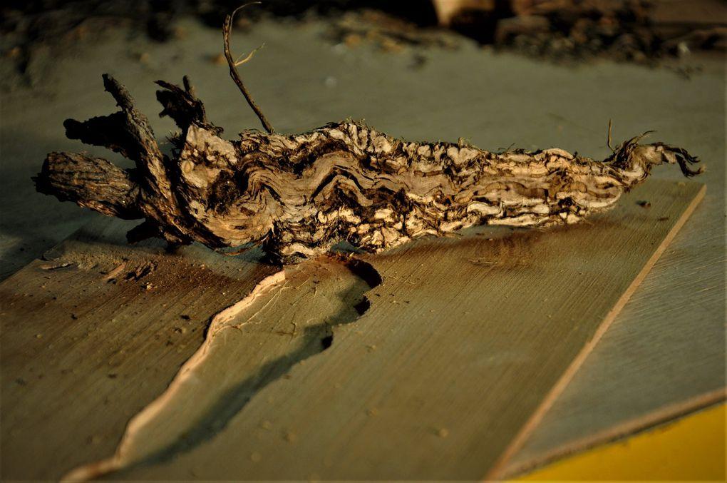 Le bois d'immortelle brut en 3 plus une photo en noir et blanc.