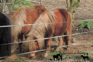 Quelle alimentation pour un cheval ayant un foie fragile?