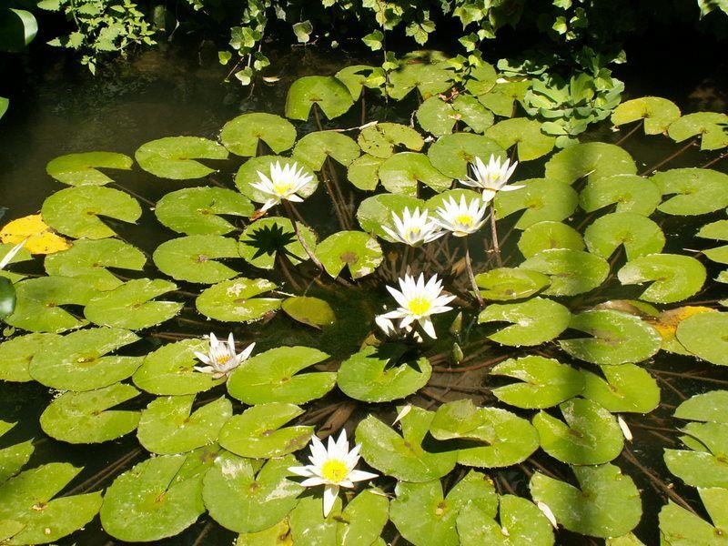 Un peu de rêve, roseraie du Parc abbaye de Chaalis, bambouseraie d'Anduze, Varengeville, Clos du Coudray