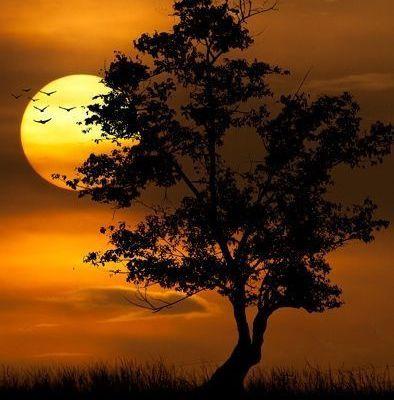 Paysage - Nature - Arbre - Coucher de soleil - Picture - Free