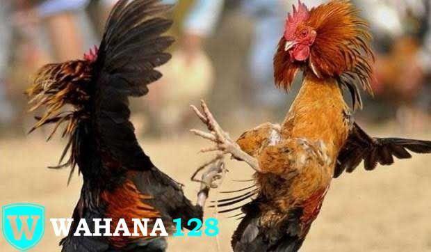 Situs Judi Ayam Online Wahana128 Adalah Agen Sabung Ayam Online Dan Judi Slot Terbaru Dengan Menggunakan Satu Akun Saja