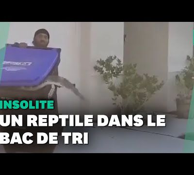 Il a attrapé un alligator… avec sa poubelle!