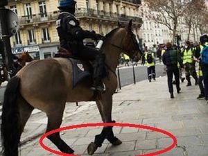 Les chevaux de la Police Nationale n'ont aucune protection particulière aux sabots contre des chausse-trappes pointus .
