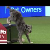 Heelwork to Music - Freestyle International Competition Part 1 | Crufts 2016
