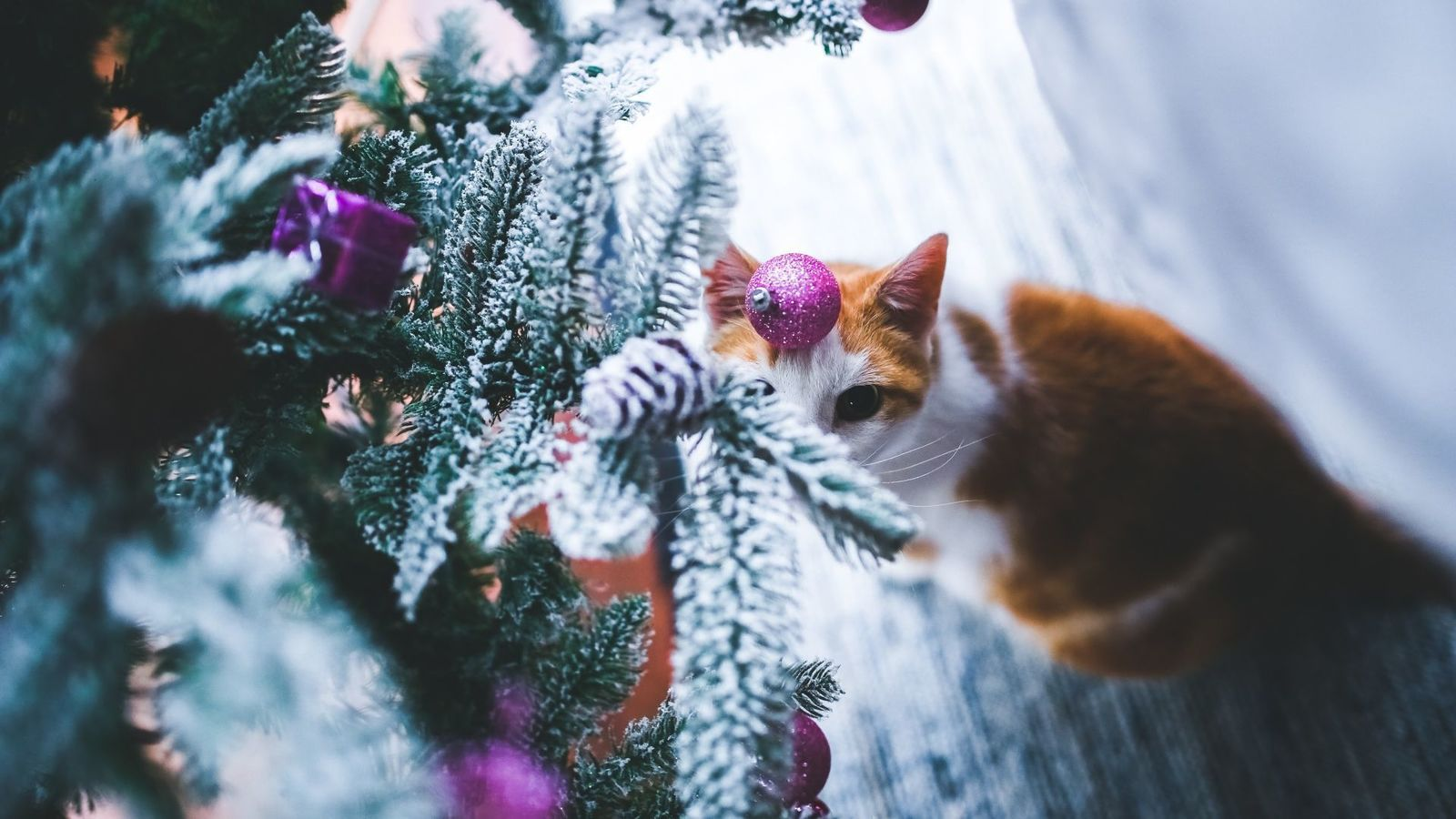 Conseils sapin noel chat