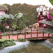 Exposition-orchidées-au-parc-floral - Photos de Meung sur Loire et sa région