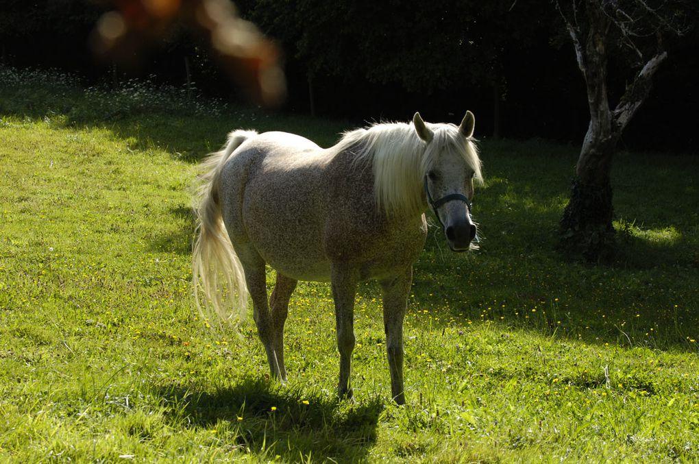 Elevage partenaire situé en Bretagne aun sein duquel nos 3 juments Perlina, Lutécia et Wezera sont en contrat élevage à vie.