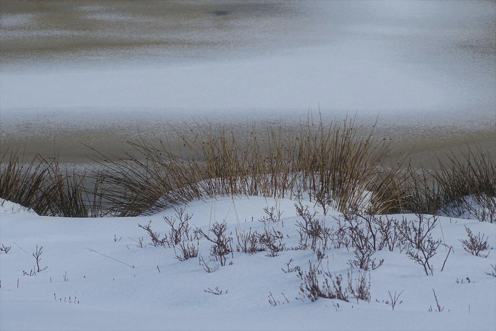 La magie des Hautes Fagnes sous la neige en avril ...