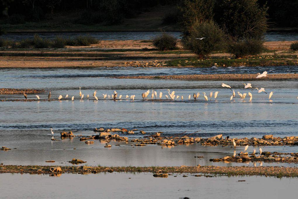 La COP 21 des oiseaux