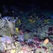 Un robot sous-marin révèle les beautés cachées de l'Antarctique - Sciences - Numerama