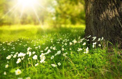 Mercredi 20 mars 2019 : Vive le printemps !