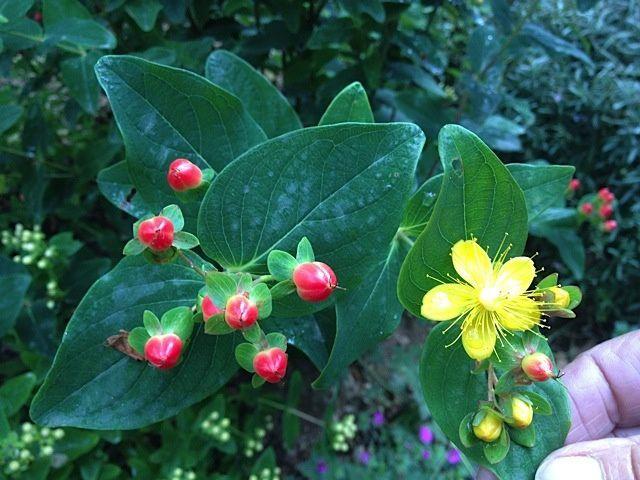 Jardin des Martels - 7 juillet 2014 (35 photos)