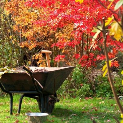 Côté jardin en novembre