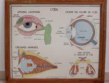 Affiche scolaire Rossignol L'oeil ou le gout et l'odorat  Années 60 Vintage