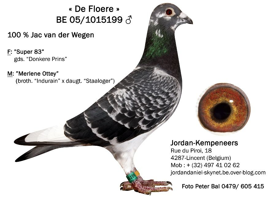 Album - van der Wegen Collector