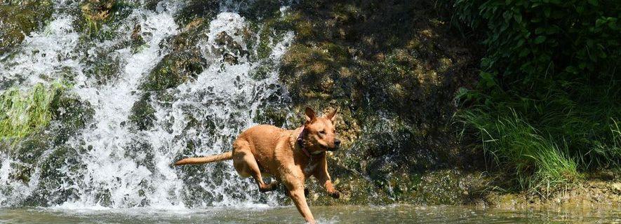 Après la mort d'un chien, la préfecture alerte sur la présence de cyanobactéries dans le Lez