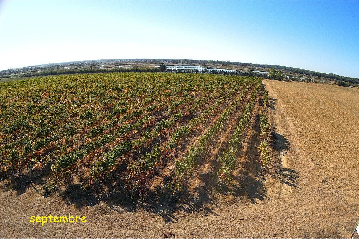 Vignoble de la Guittière à Talmont Saint Hilaire
