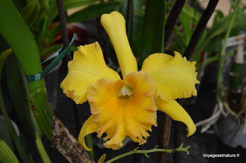 Féerie d'orchidées