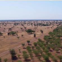 La Grande Muraille Verte promet une vie meilleure aux agriculteurs africains victimes de la crise climatique