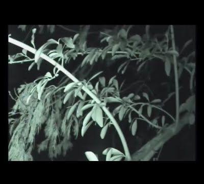 Seres extraños en los bosques IV