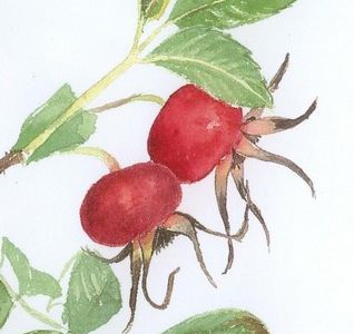 dessiner des végétaux ?