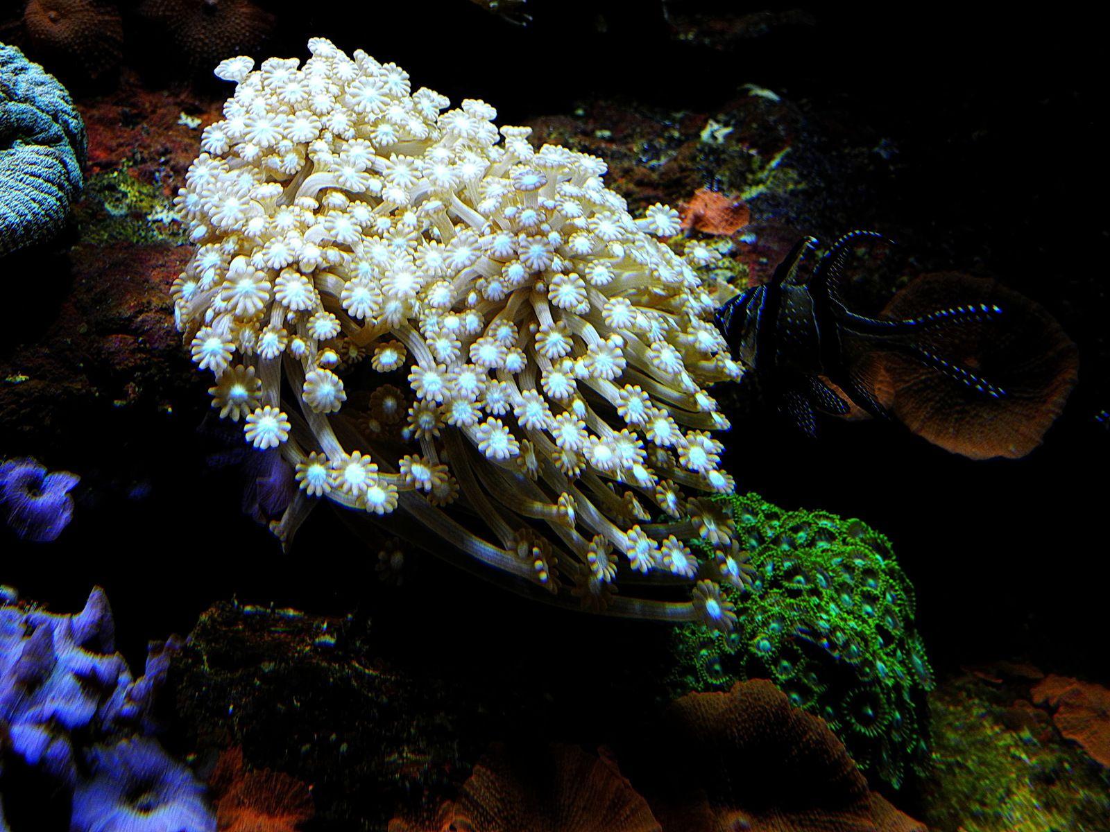 L'aquarium du Cap d'Agde