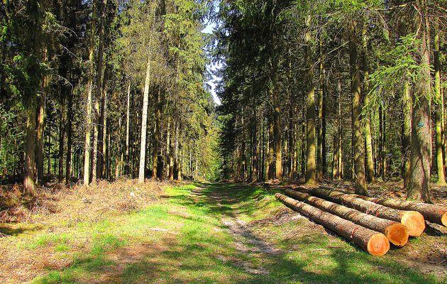 carrefour_Ancienne Route Tortue_Laie de la Chaussée de l'étang