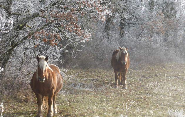 Bérat : Les chemins de la passion à cheval
