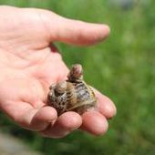 La Coquille de Massiac racontée par Jojo l'escargot