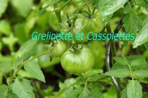 Histoires de Tomates au Potager de Septembre