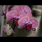 💐 Ne jetez pas votre orchidée ! 🍀