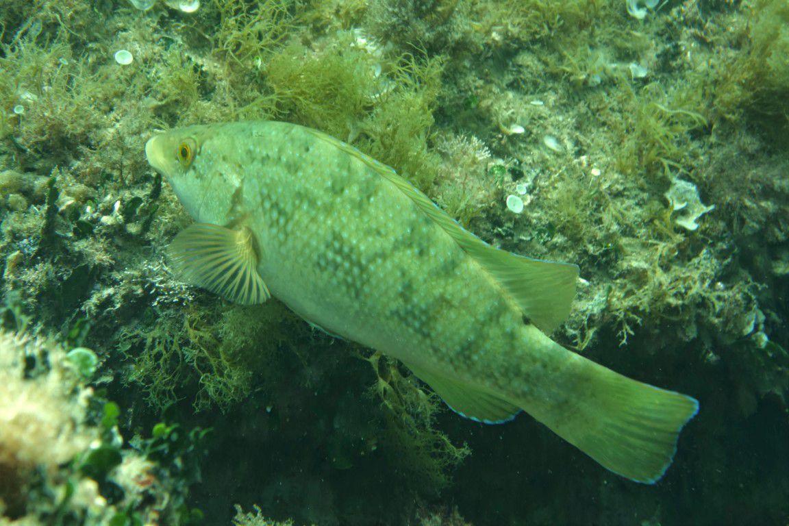 plongée dans la réserve du Cap Rousset