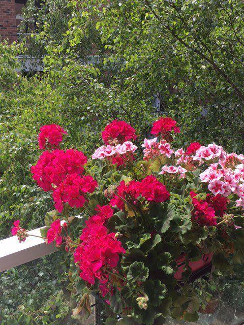 BdG 2  floraison de Juin