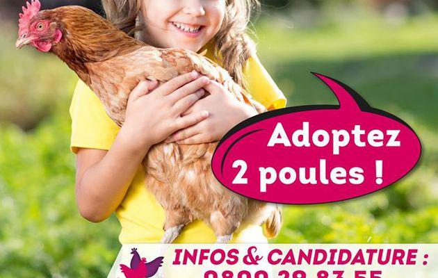 Adoptez 2 Poules avec Ardenne-Métropole