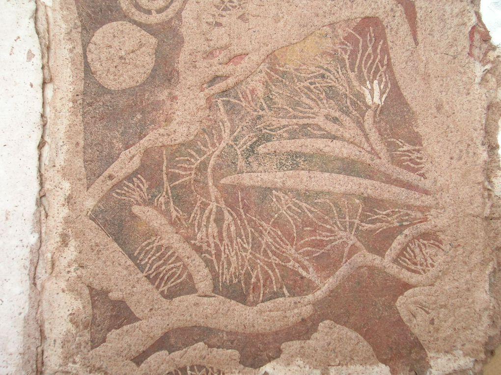 gravures sur papier de fossile de bouleau récolté en Brière sous la vase !