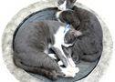 Bienheureux chats (Thaïlande)