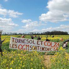 Variétés rendues résistantes à un herbicide... parlementaires rendus sensibles à la bêtise (2)