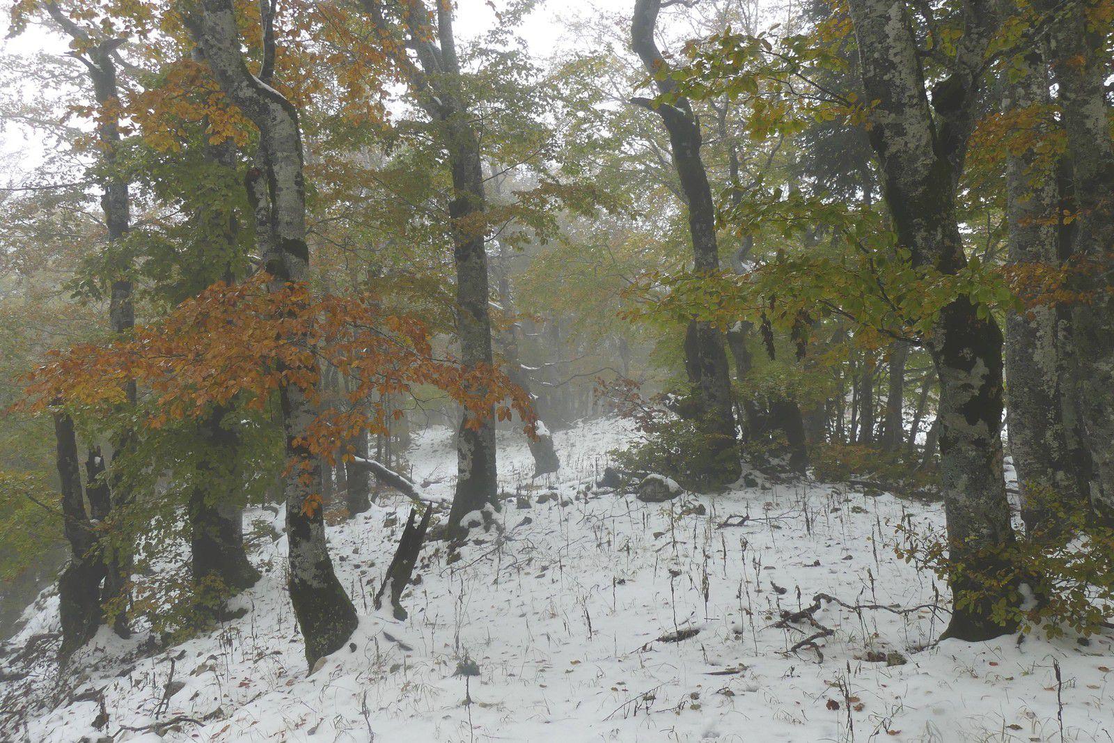 Un tour en Forêt