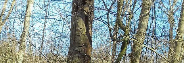 Un petit tour en forêt-