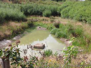 Le crapaud calamite est protégé à l'échelle internationale (convention de Berne annexe 2 directive habitats annexe 2, 4).
