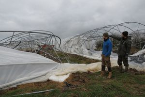 Après la tempête, les serres de la ferme maraîchère Dieudonné sont à terre