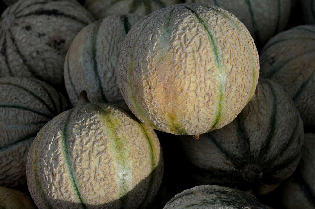 Les bons melons. (2 photos)