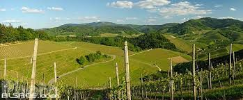 Württemberg and vineyards