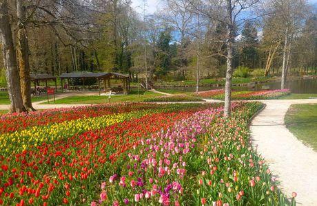 Des tulipes, des tulipes....