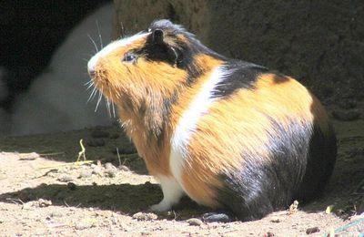 faune : mammifères rongeurs
