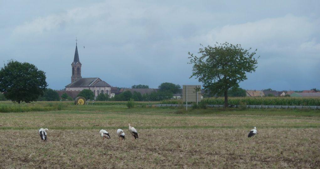 Fin de l'été en Alsace