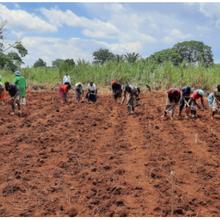 Le Kenya fait progresser le maïs génétiquement modifié pour augmenter les rendements et réduire l'utilisation des pesticides